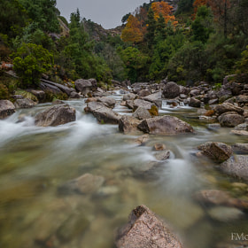 Fall #5 by Fernando Moreira (fmoreira)) on 500px.com