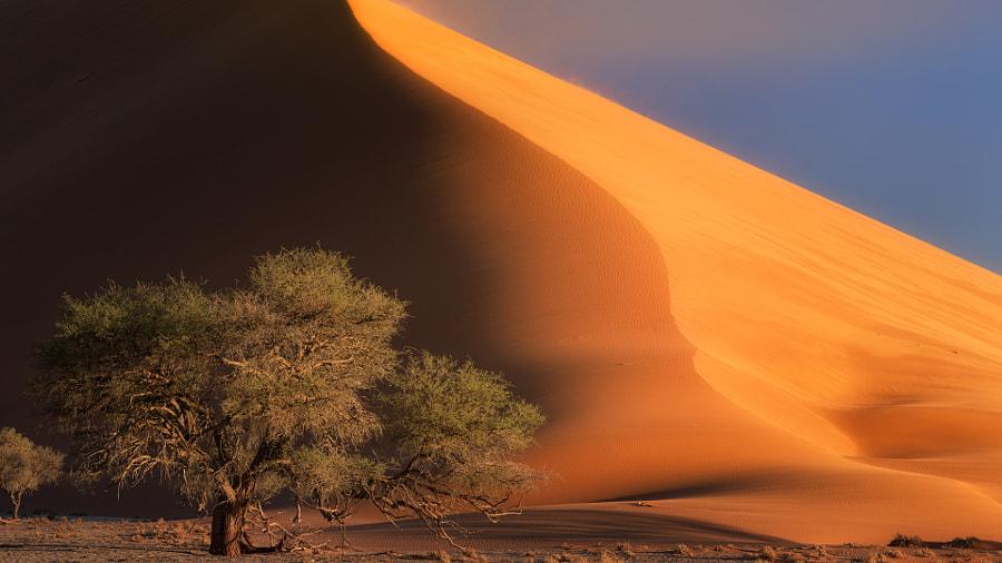 .: deserts :.