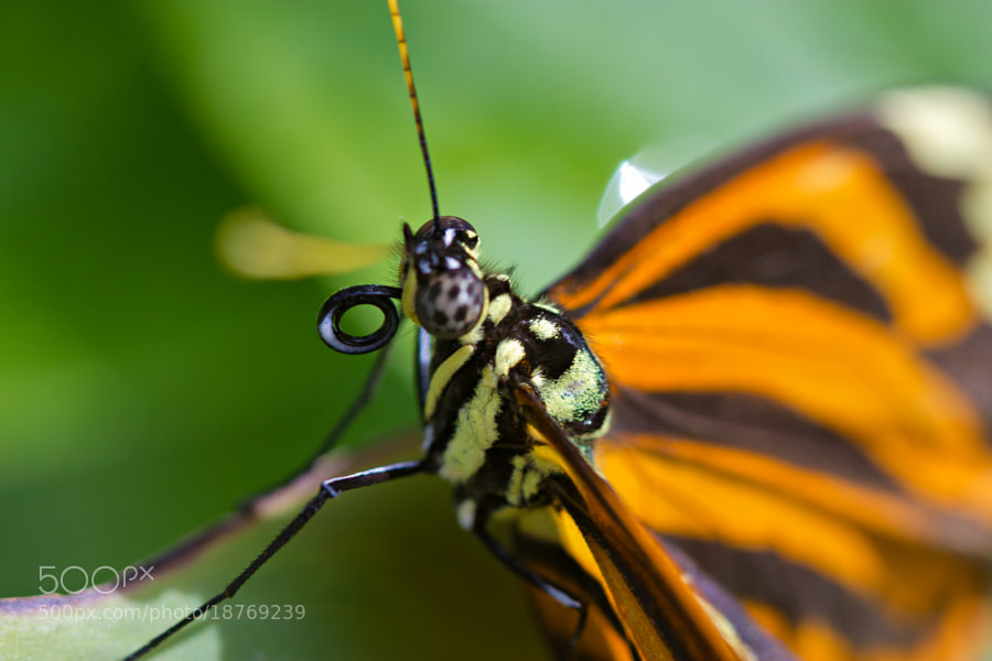 Butterfly World, Coconut Creek, Florida