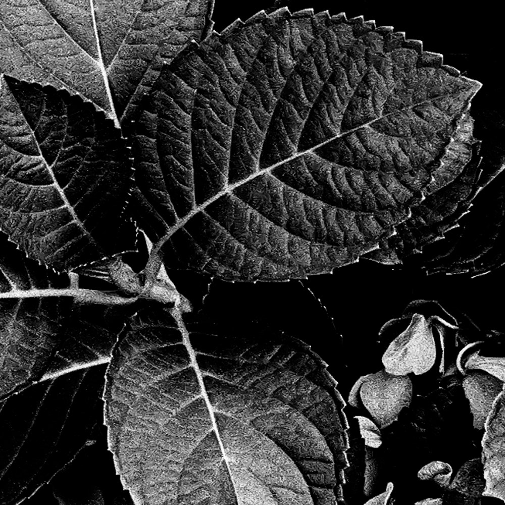 Photograph Into Plants by PJ Resnick on 500px