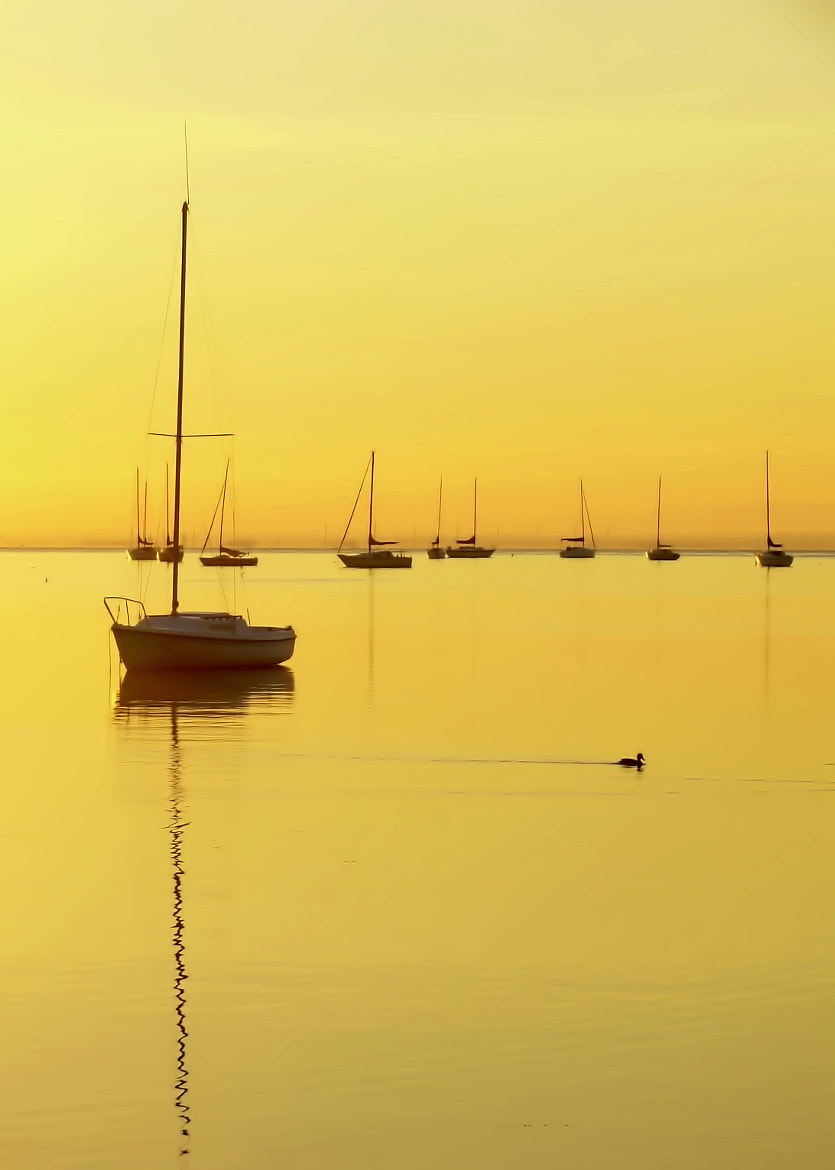 Photograph Early Morning Yellow Glow  by John Kimball on 500px