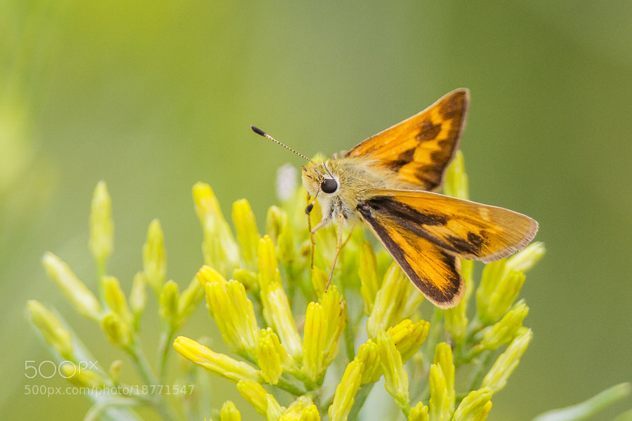 Photograph .: Skipper :. by Jon Rista on 500px