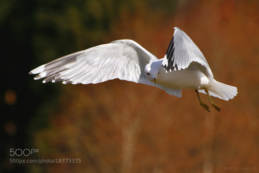 Photograph Flight by MV Pictures on 500px