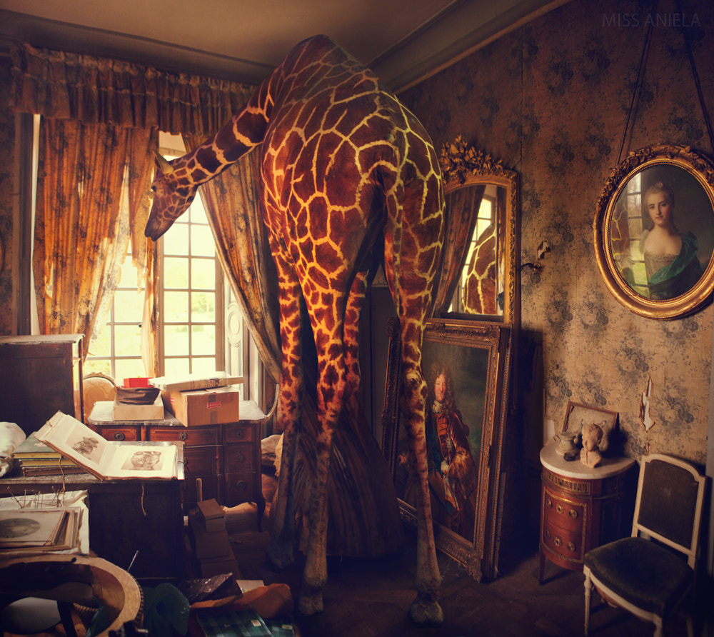 Photograph High & hungry by Miss Aniela on 500px