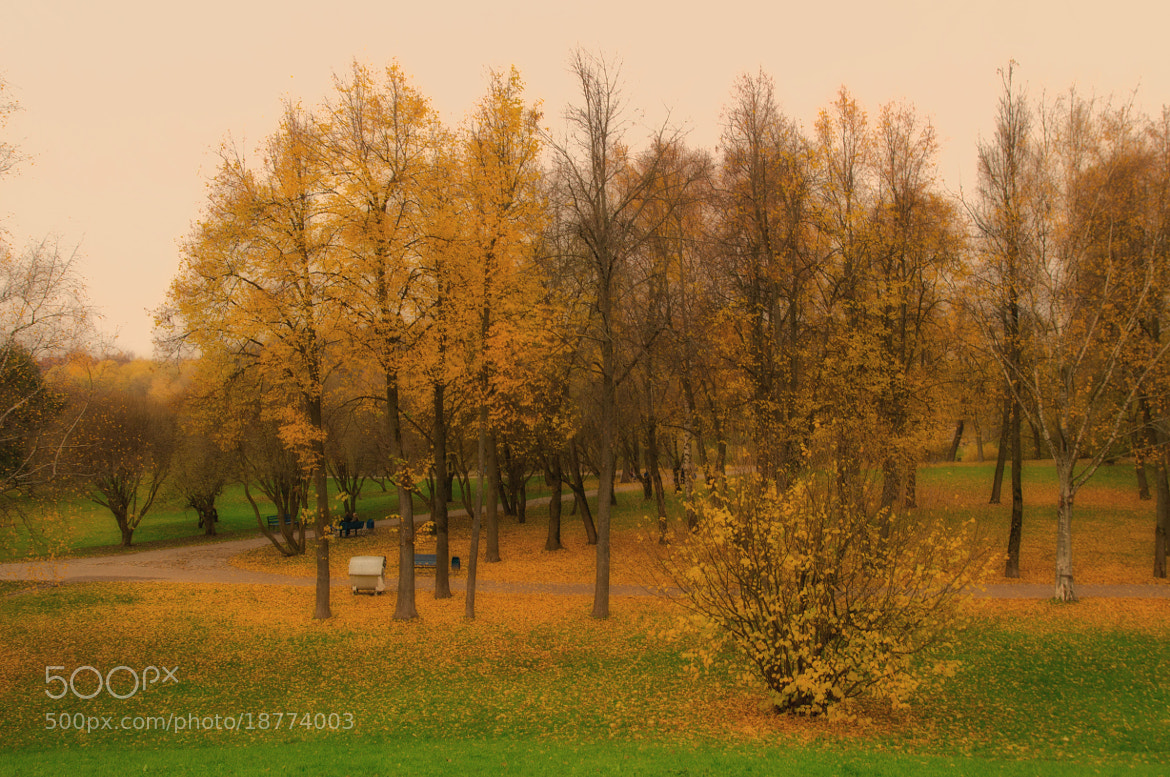 Photograph Autumn in park by Sergey Suhanov on 500px