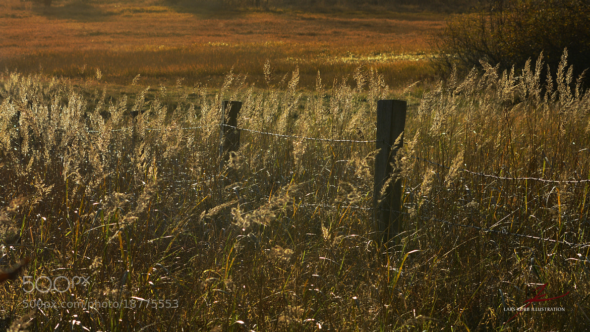 Photograph Autumn Fields by Lars Korb on 500px