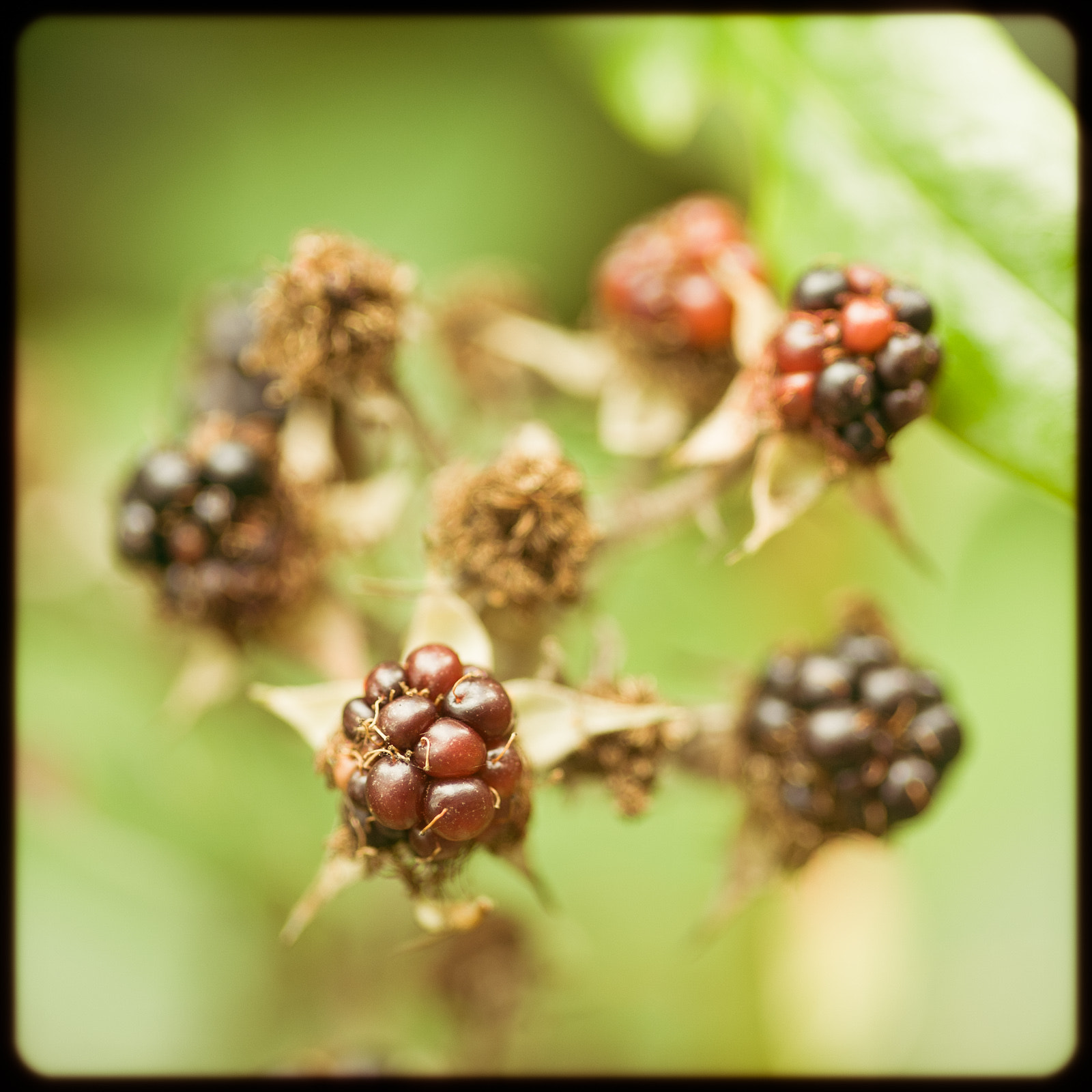 Photograph Wild Berries by Simon Vogt on 500px