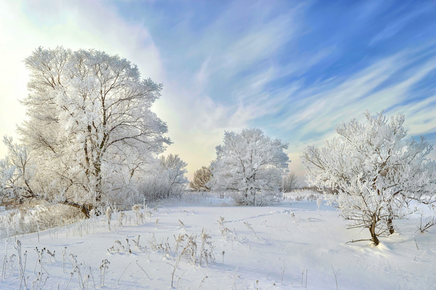 Winter wonderland! by Konstantin Baidin on 500px.com