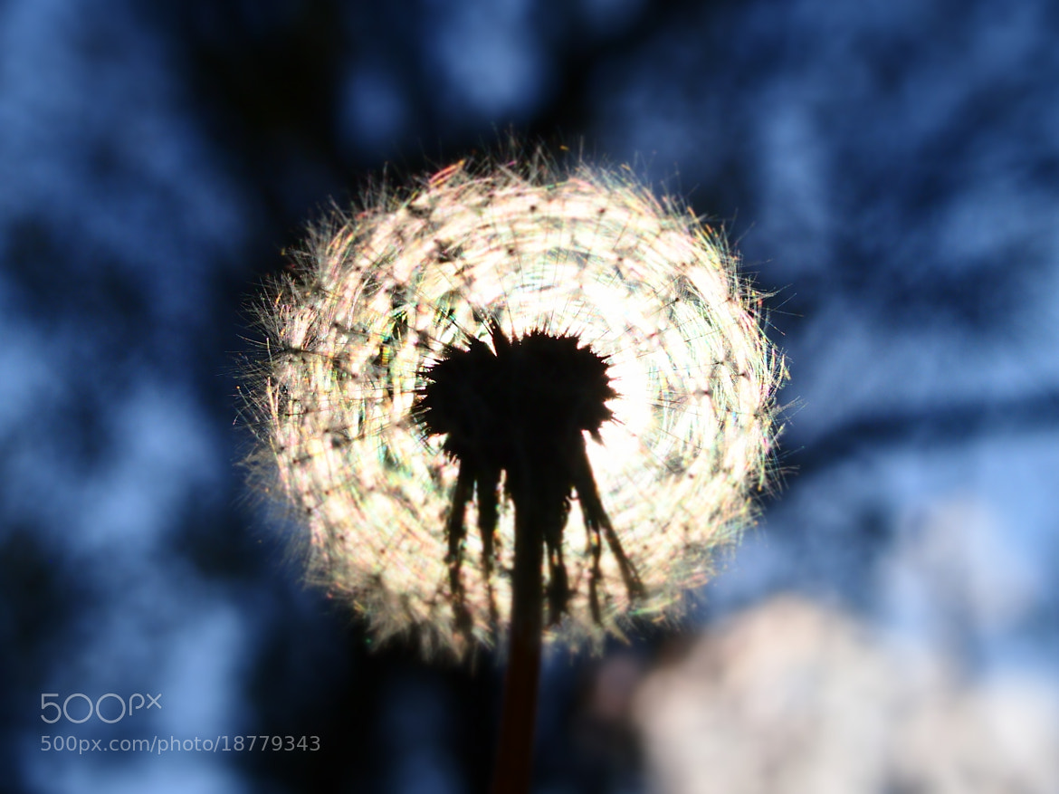 Photograph The world is a dandelion by Tony  Carriero on 500px