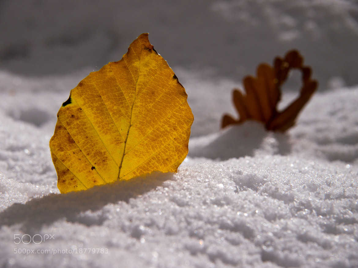 Photograph First snow by Michael Lüdtke on 500px