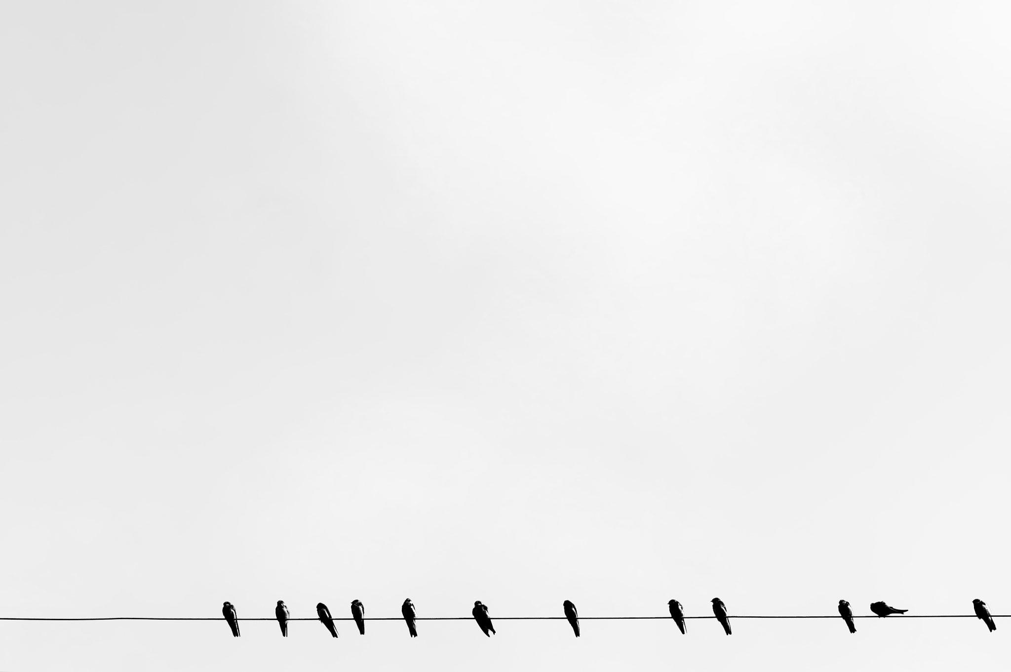 Photograph On The Line by Martijn Akse on 500px