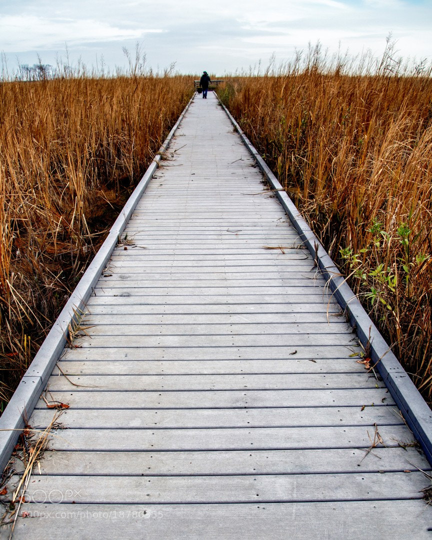 Photograph Marsh Walk by Cheryl Atkins on 500px