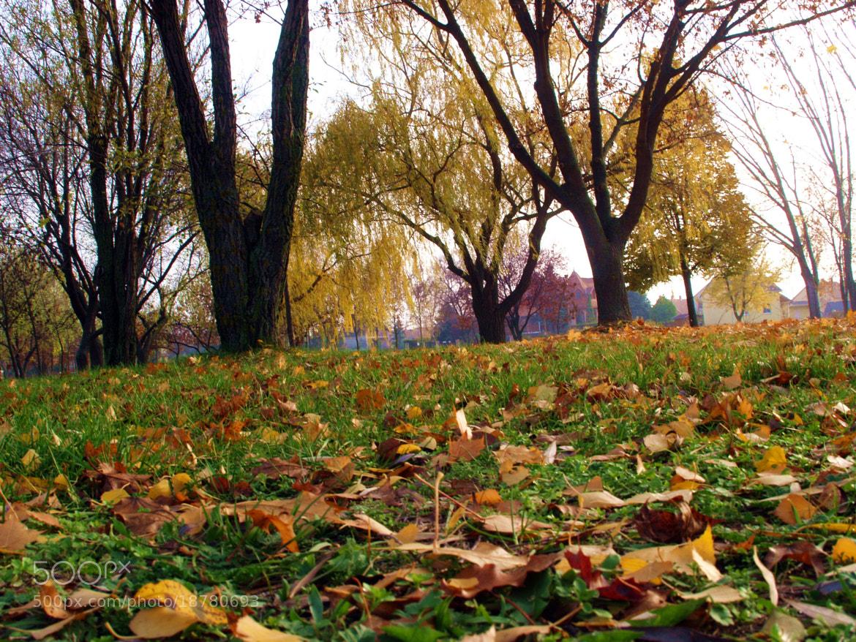 Photograph Autumn by Kocsis András on 500px