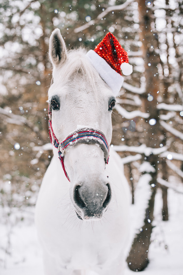Adorable festive white horse by Anastasia Belousova on 500px.com