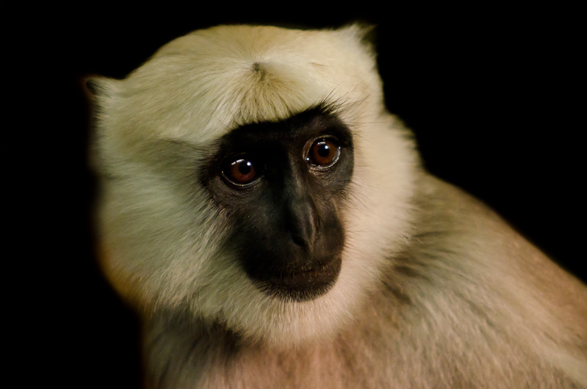 Photograph Monkey-Portrait by Carsten Welzel on 500px