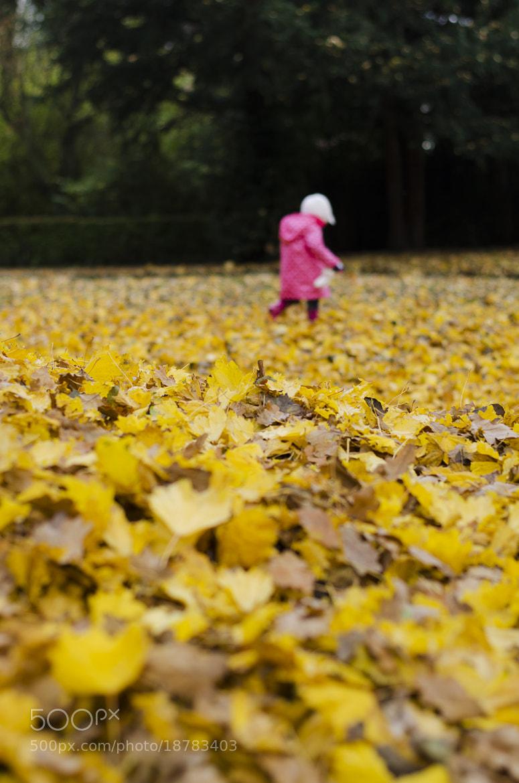 Photograph Autumn by Paul Hoaksey on 500px