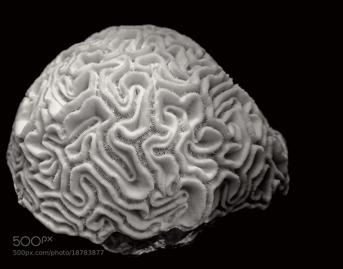 Photograph Brain Power by Patty Barker on 500px