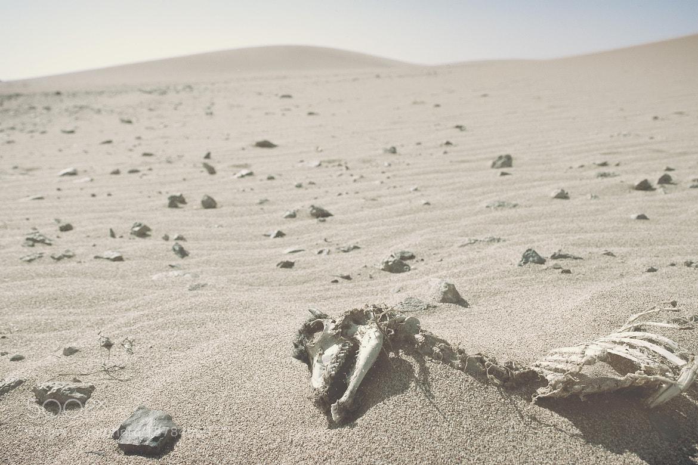 Photograph Guajira::. by Juan Jaramillo on 500px