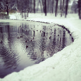 ducks by Константин  Хохлома (darkside-4ever)) on 500px.com