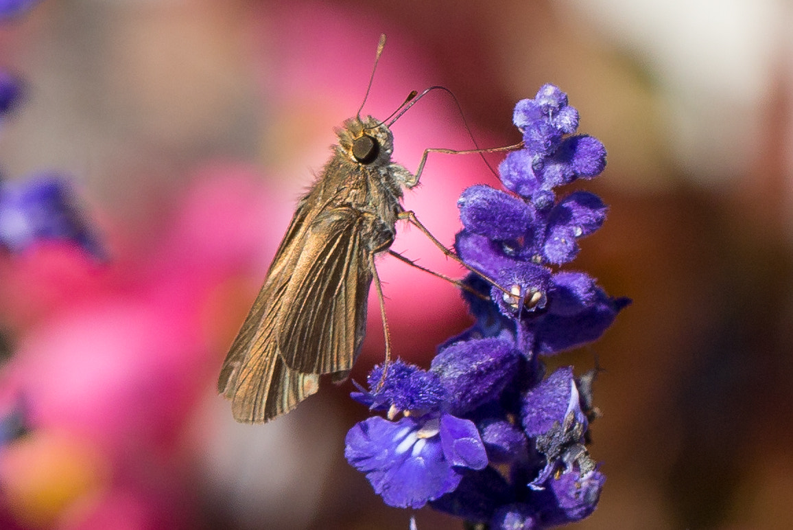 Photograph Small Butterfly by George Bloise on 500px