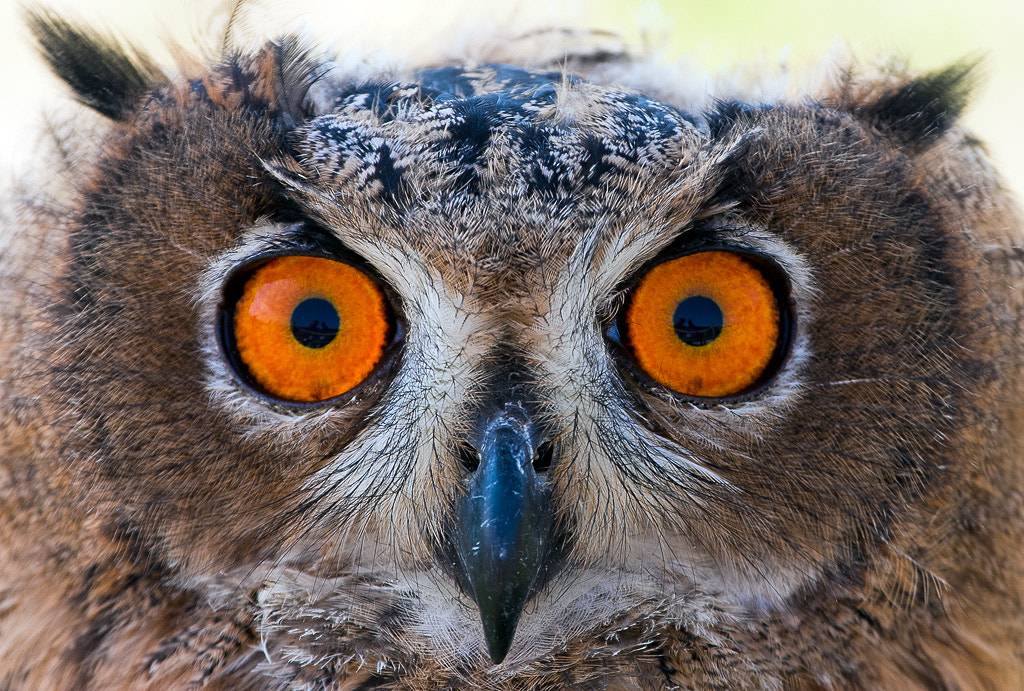 Photograph Look at my eyes by Javier Abad on 500px