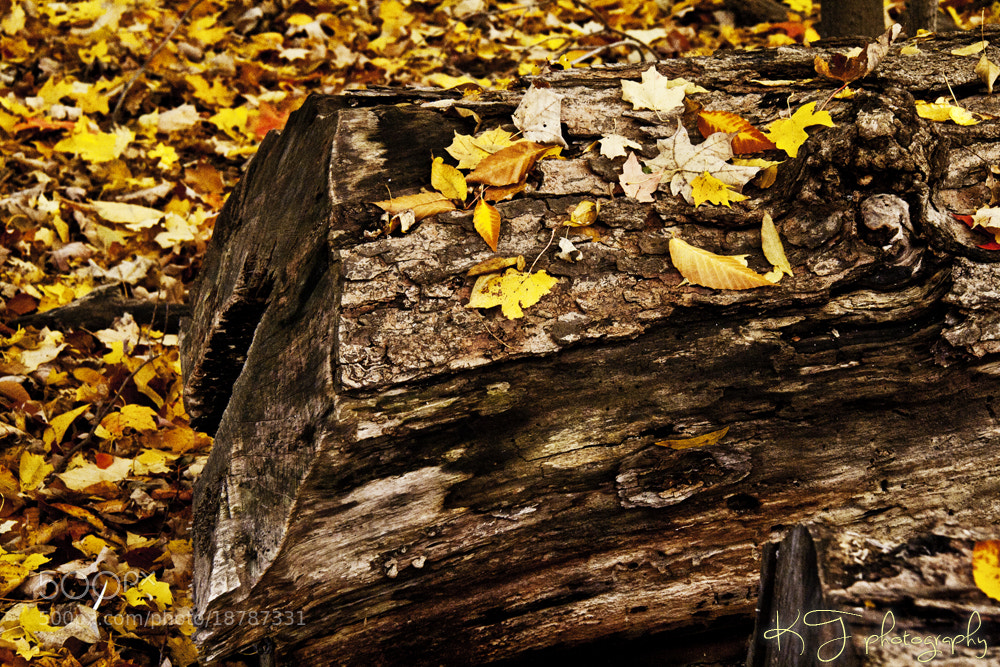 Photograph Autumn. by Kaity Theriault on 500px