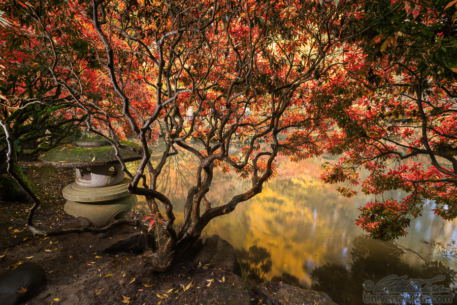 Autumn foliage and reflections in pond. by William Lee 1