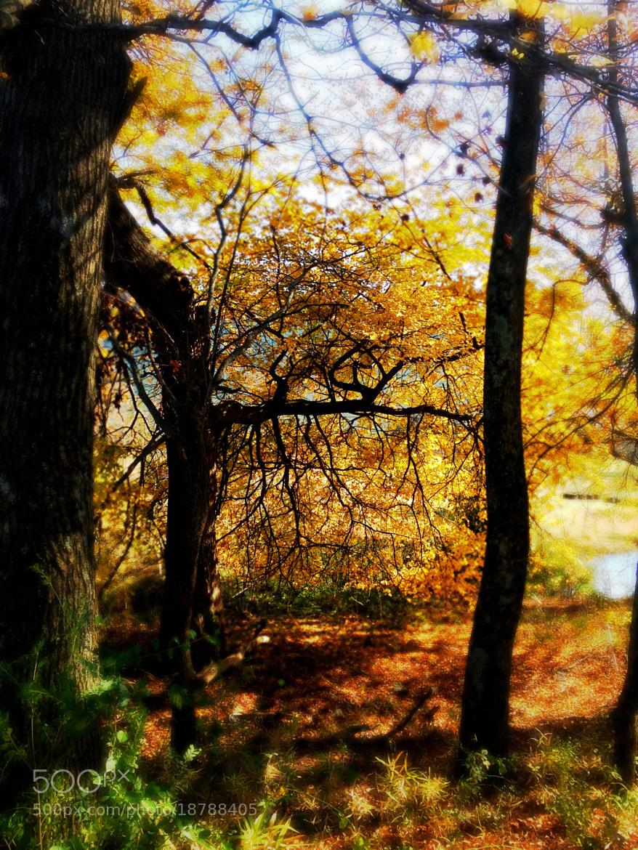 Photograph Autumn Tone by Mark Jones on 500px