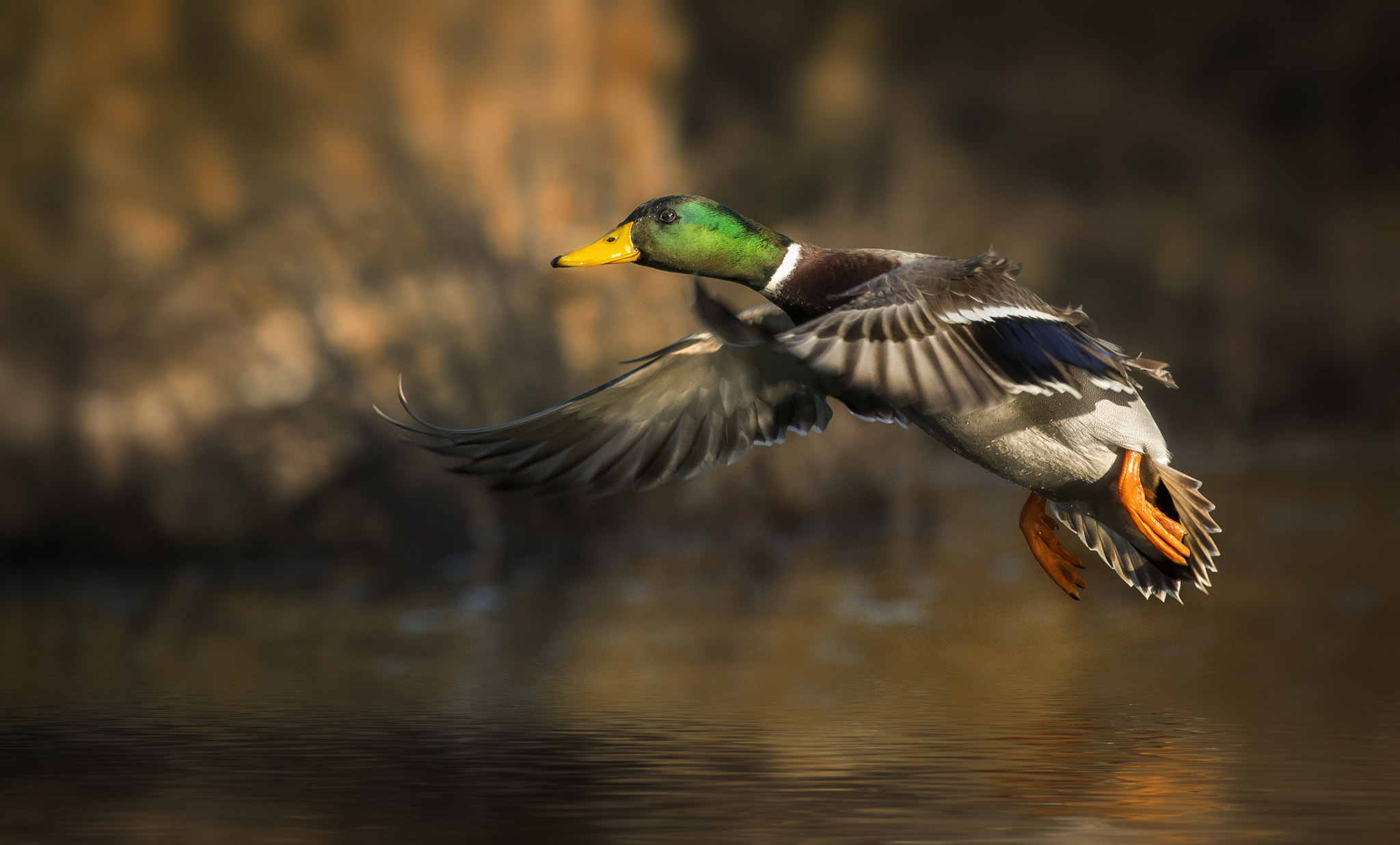 Photograph fly, fly, fly by Detlef Knapp on 500px