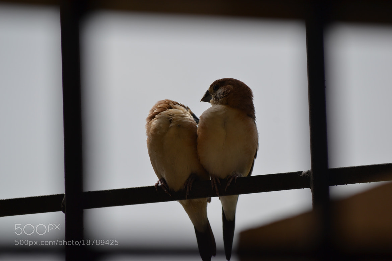 Photograph Love Birds by S.T.Kiran Kumar on 500px