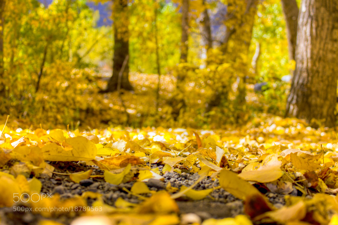 Photograph Leaves of Autumn by Jacob Penderworth on 500px