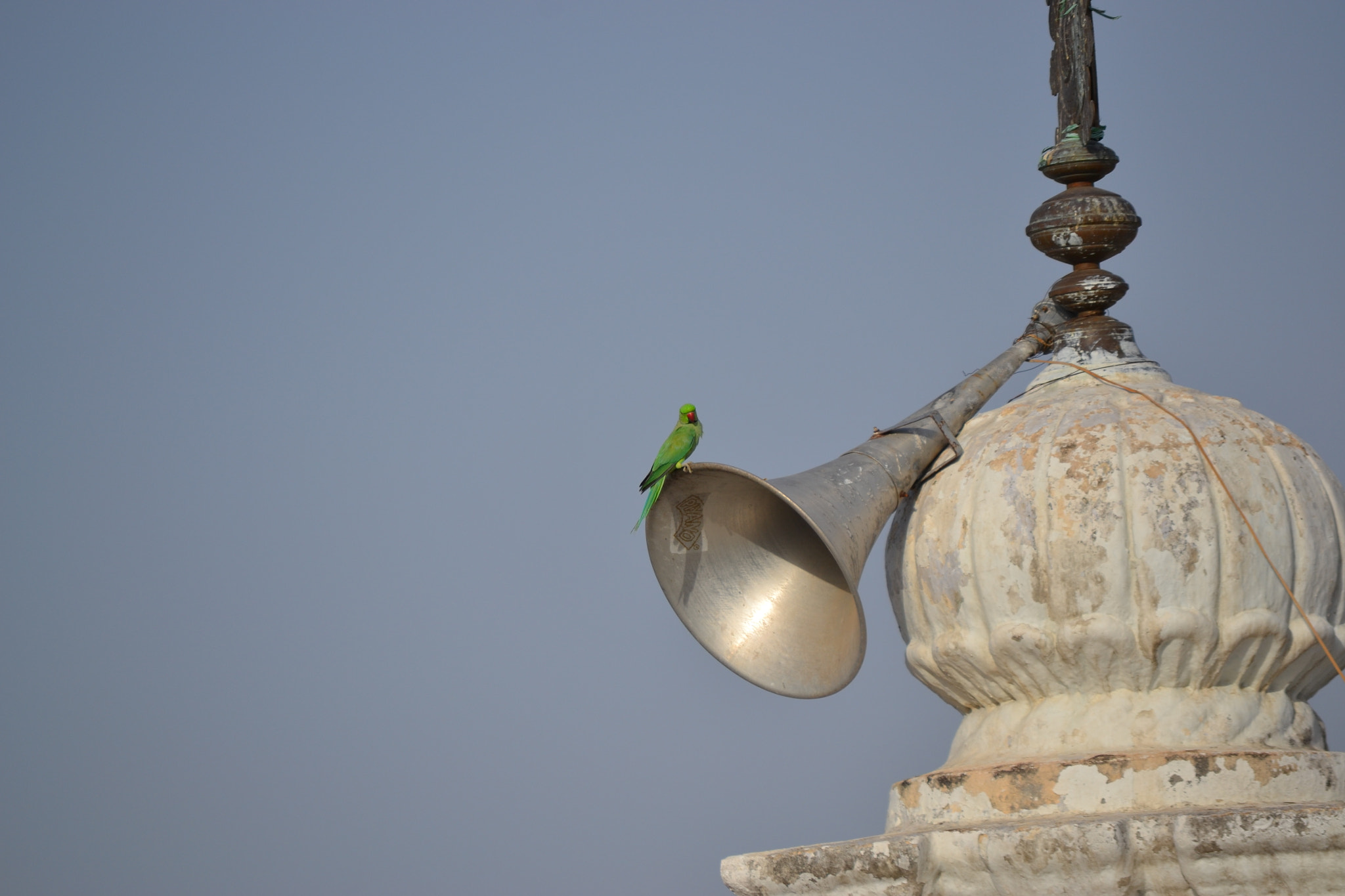 Photograph Parakeet Announcing the arrival of Monsoon in India by S.T.Kiran Kumar on 500px