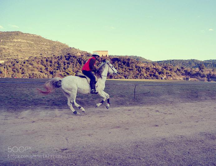 Photograph Horse by Nilü Arcos on 500px