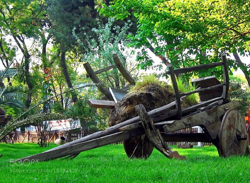 Photograph Tired Ox-Cart by Sadettin  Uysal on 500px