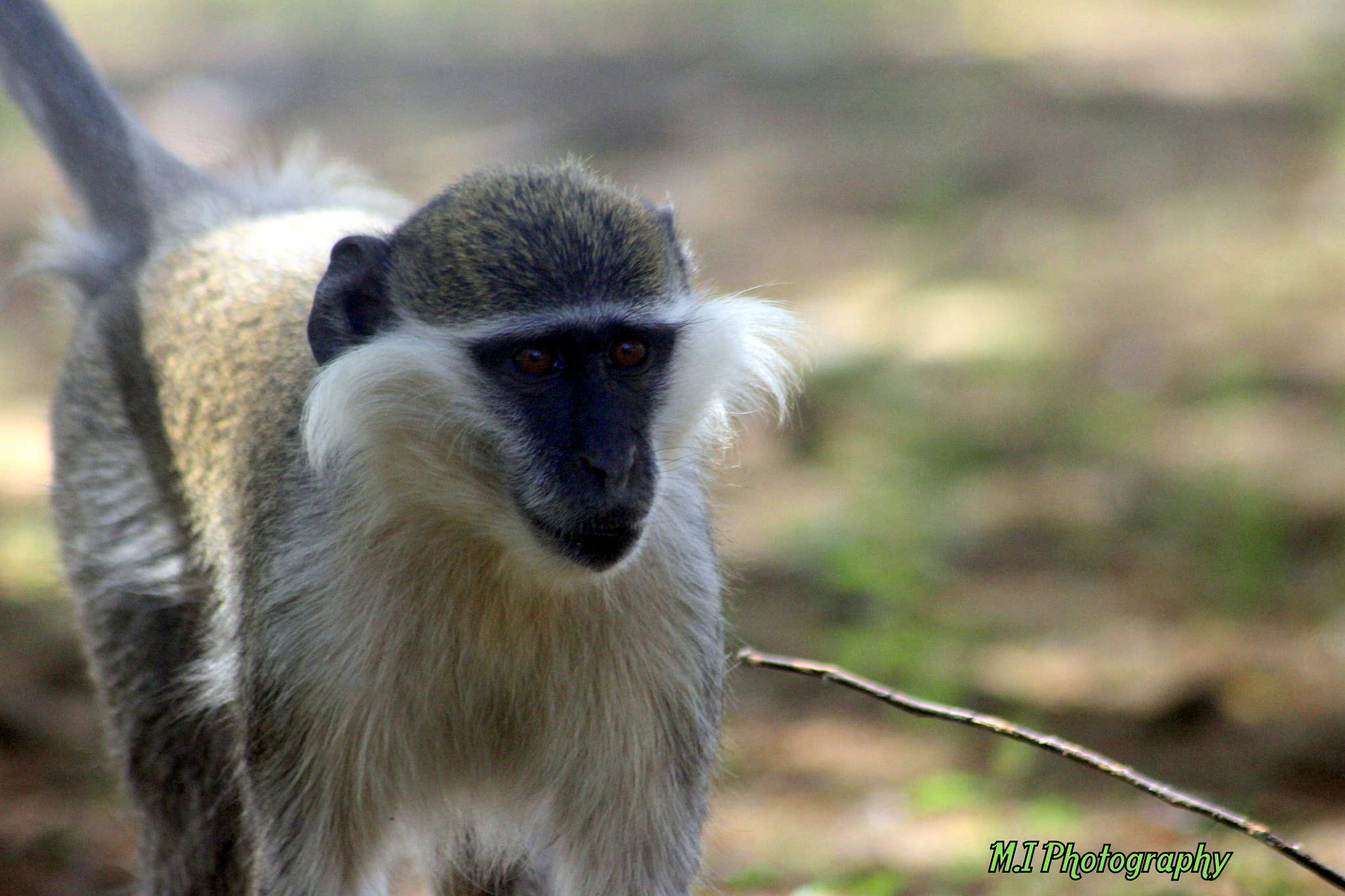 Photograph monkey by Mohamed Ismael on 500px