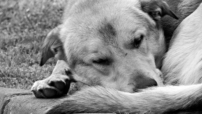 Photograph Sleep by Murat Şorkılıç on 500px