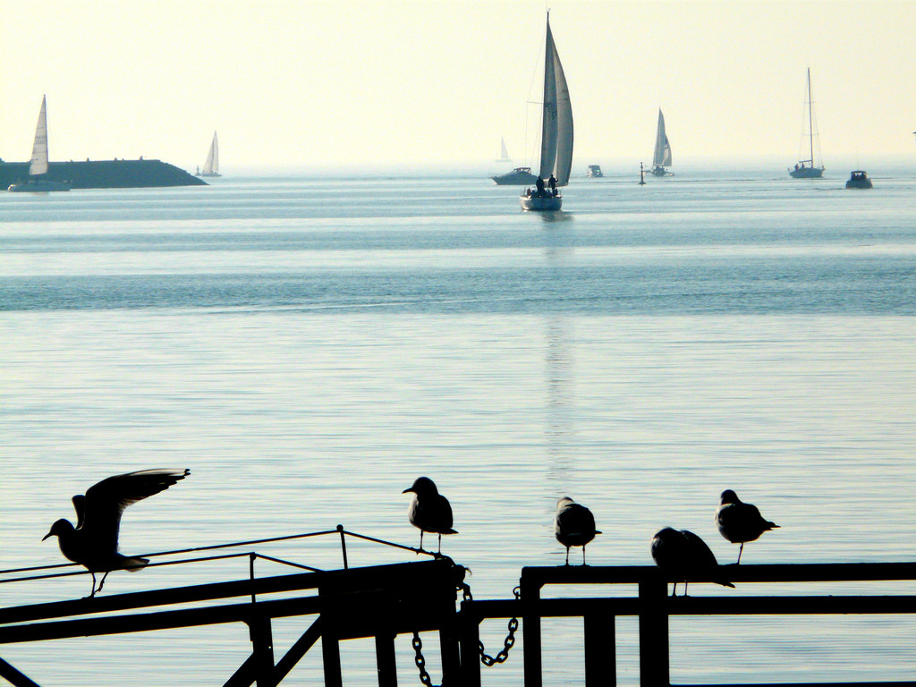 Photograph Birds & Boats by jslocke on 500px