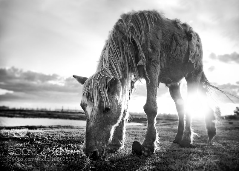 Photograph Horse by Mariano Verra on 500px