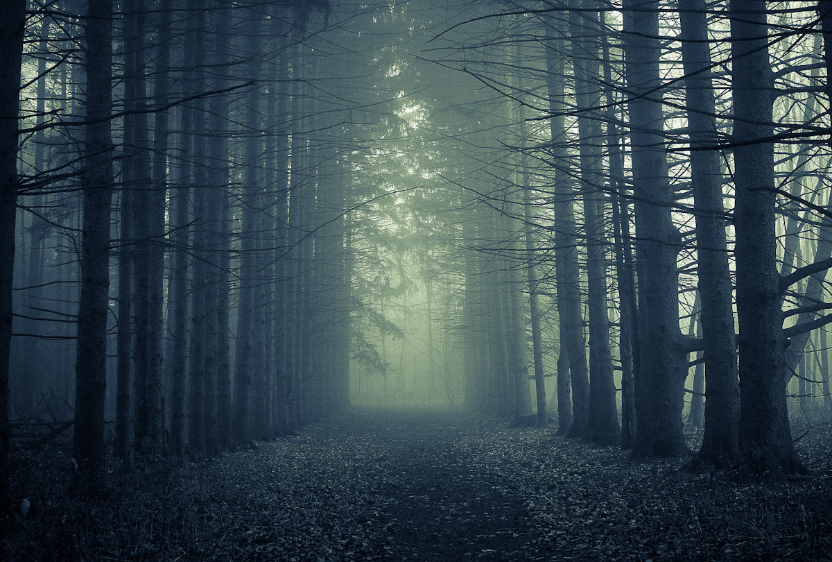 Photograph Wide shot through the trees by Don Cox on 500px