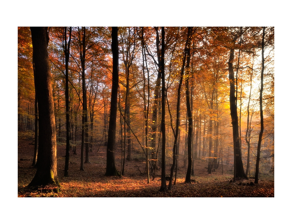 Photograph Autumn  by Gilles MOLINIER on 500px