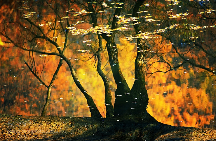 Photograph reflection by ljc0970 on 500px