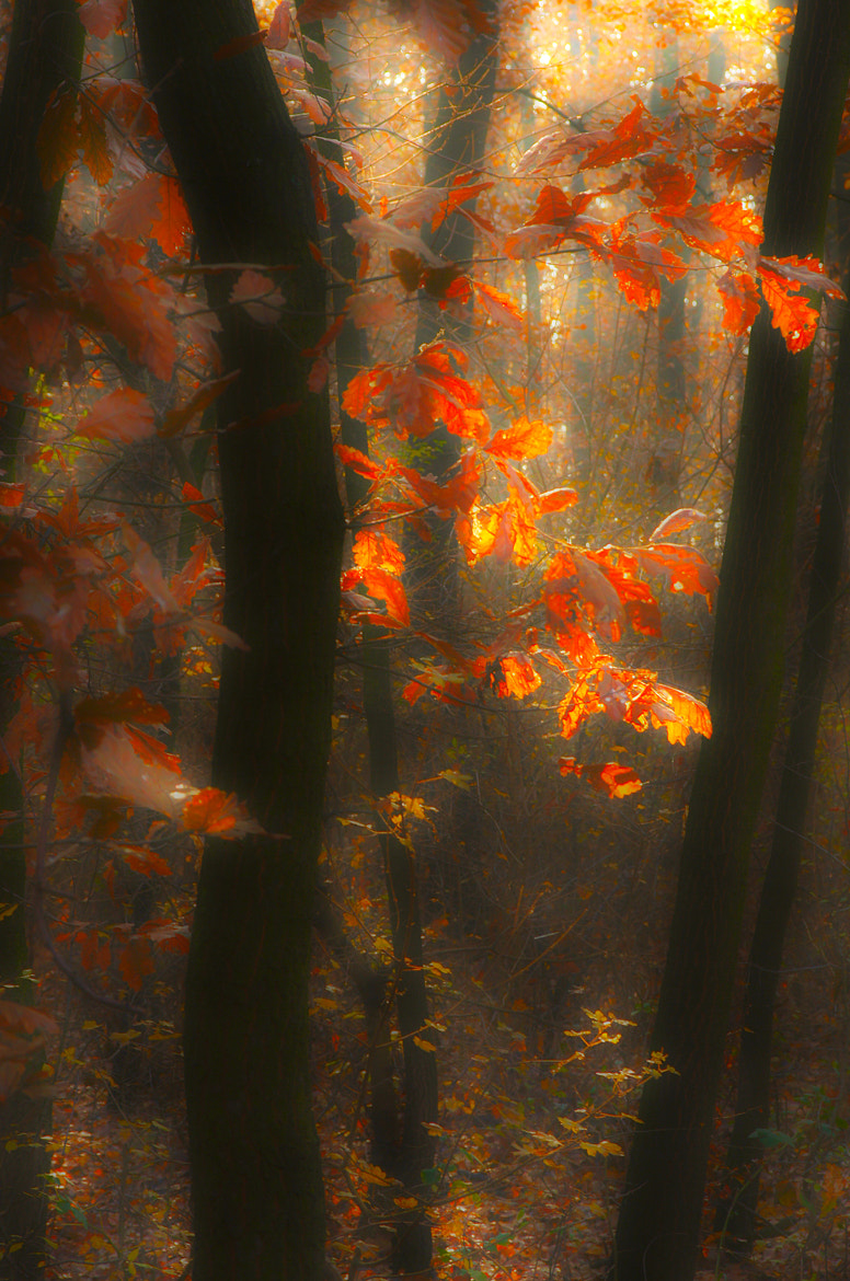 Photograph Dream forest colors by Andy 58 on 500px