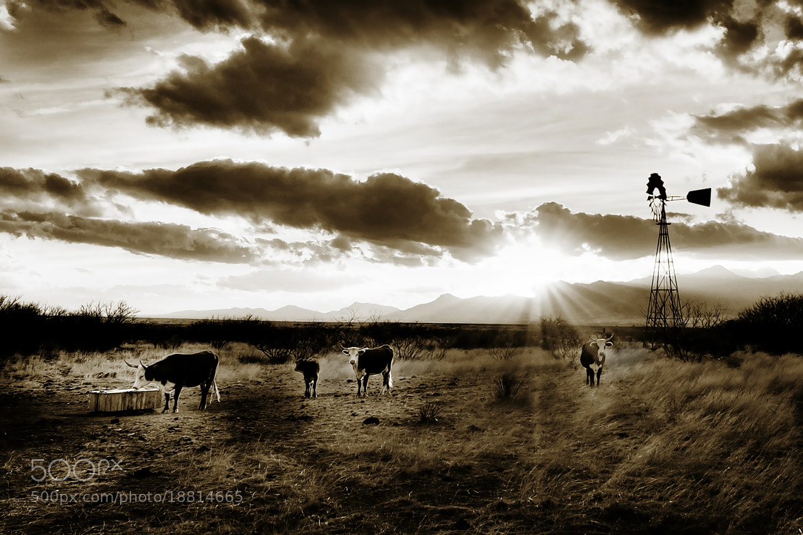 Photograph Ranch scene in Cochise County by John  Forrey on 500px