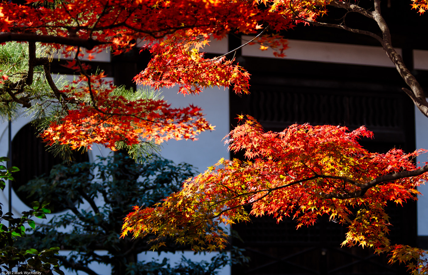 Photograph Kyoto by Mark Wycherley on 500px