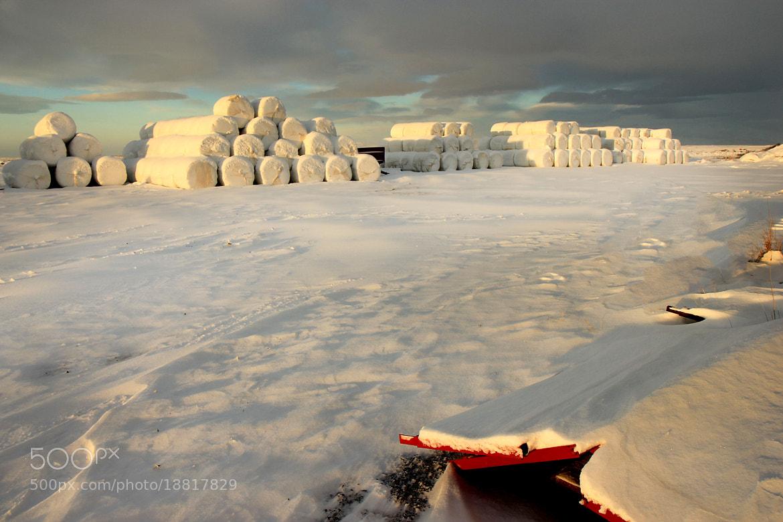 Photograph Winter sun  by Anna Guðmundsdóttir on 500px