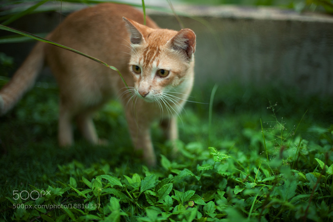 Photograph kitten by Nazrin Shah on 500px