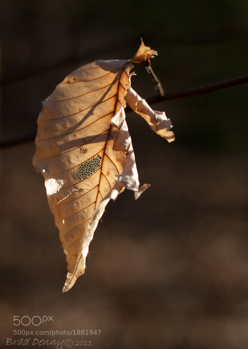 Photograph Remains of a Season by Brad Denny on 500px