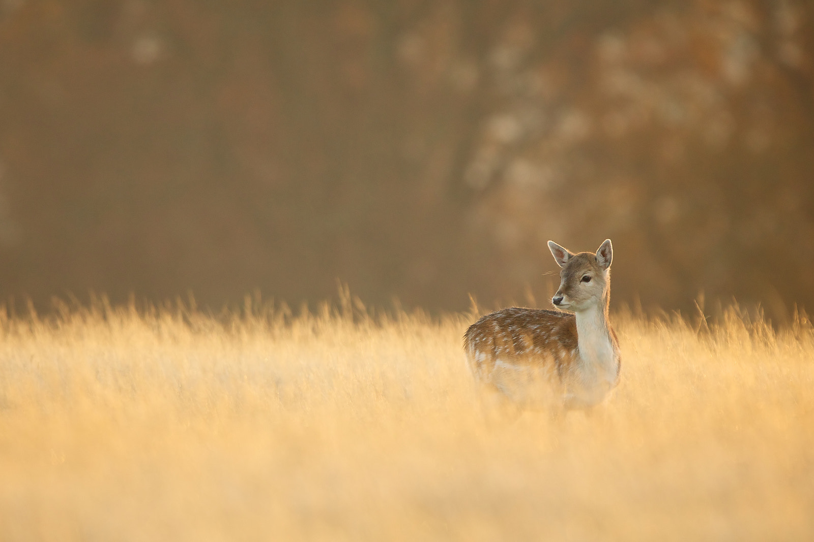 Photograph a little one by Mark Bridger on 500px
