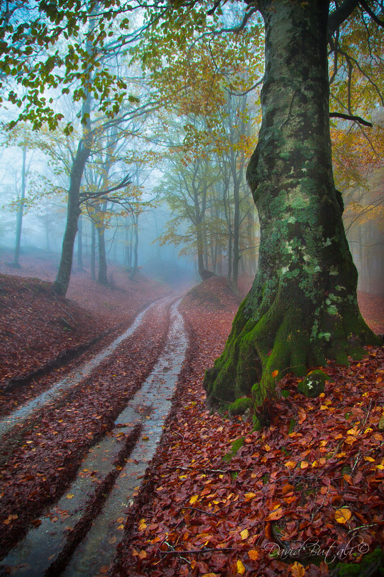 Photograph Forest IV by David Butali on 500px