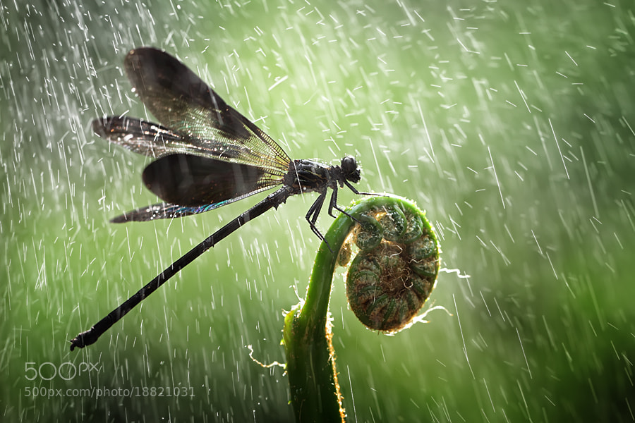 Photograph Raining by shikhei goh on 500px